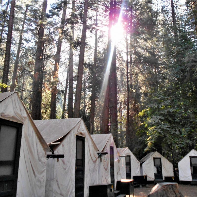 Camping Under a Forest of Trees in Historic Canvas Tent Cabins at a National Park!